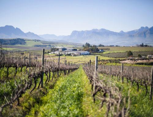 Mulderbosch Wine Farm